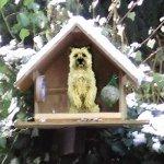 10. Türchen: Der Hund im Vogelhaus